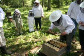 Beekeepers tuition